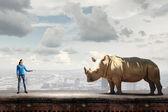 Rhino on lead — Stock Photo