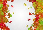 Autumn falling leaves background — Stock Photo