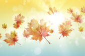 Autumn falling leaves background — Stock Photo
