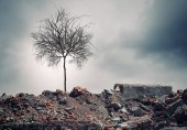 Dry tree — Stock Photo