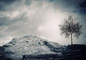 Dry tree — Zdjęcie stockowe