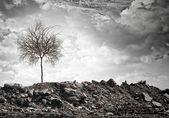 сухое дерево — Стоковое фото
