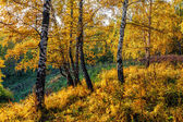 Autumn in Siberia — Stock Photo