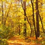Autumn forest — Stock Photo #53359961