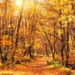 Autumn forest — Stock Photo #53360467