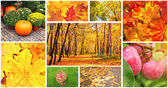 Set of photos with autumn leaves and apples — Stock Photo