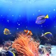 Underwater scene with tropical fish — Stock Photo #54273001