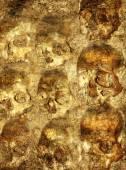 Background with human skulls  — Stock Photo