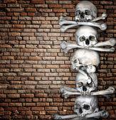 Human skulls and bones — Stock Photo