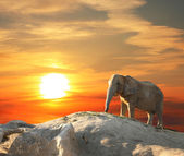 Elefante ao pôr do sol — Foto Stock
