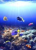 Underwater scene with tropical fish — Stock Photo