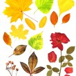 Autumn leafs and dry rose — Stock Photo #59520993
