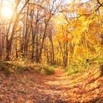 Sun in autumn forest — Stock Photo #59521003