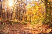 Sun in autumn forest — Stock Photo