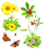 Collection of green leaves, flowers and insects — Stock Photo