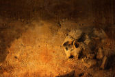 Background with human skull — Stock Photo