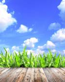 Spring grass and old wooden planks — 图库照片