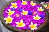 Frangipani flowers in a bowl of water  — Stock Photo