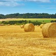 Golden hay bales in countryside — Stock Photo #58639369