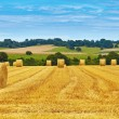 Golden hay bales in countryside — Stock Photo #58639511