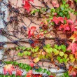 Background image of autumn leaves in vineyard  — Stock Photo #58748583