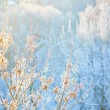 Branches covered with hoar frost — Stock Photo #61517583