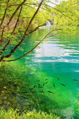 Fish in pure water of the Plitvice lakes  — Stock Photo
