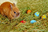 Easter bunny with painted eggs in hay — Foto Stock