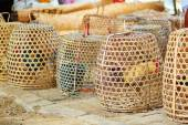 Caged roosters on a Balinese market — Stock Photo