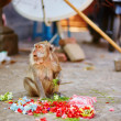 Monkey eating offerings in a Balinese temple — Stock Photo #65470385