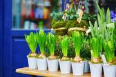 Venkovní květinářství v paříži — Stock fotografie