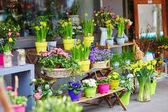 Outdoor flower market on a Parisian street — Stock Photo