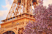 Spring in Paris — Stock Photo