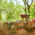 Stray cat — Stock Photo #73249667