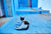 Street in Chefchaouen, Morocco — Stock Photo