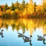 doğal sonbahar manzarası — Stok fotoğraf #78844412