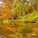 doğal sonbahar manzarası — Stok fotoğraf #78844820