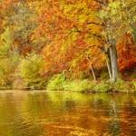 doğal sonbahar manzarası — Stok fotoğraf #78844844