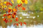 秋天的叶子的分支 — 图库照片