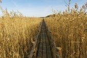 Wooden path. — 图库照片