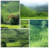 Collage of famous Munnar tea plantations in southwestern state of Kerala, India, Western Ghats range of mountains — Stock Photo