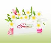 Beautiful flowers with greeting card , vector illustration with  — Stockvektor