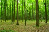 Floresta na primavera — Foto Stock