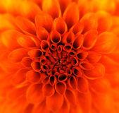 Zbliżenie kwiatów — Zdjęcie stockowe