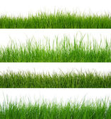 Grass on white — Stock Photo