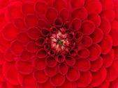 Tatlı çiçek — Stok fotoğraf