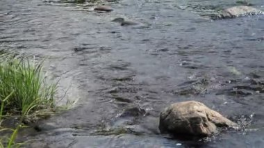 Rivers stream with stones and green grass — Vídeo de Stock