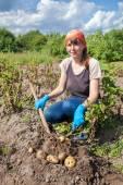 Młoda kobieta do zbioru ziemniaków na polu — Zdjęcie stockowe