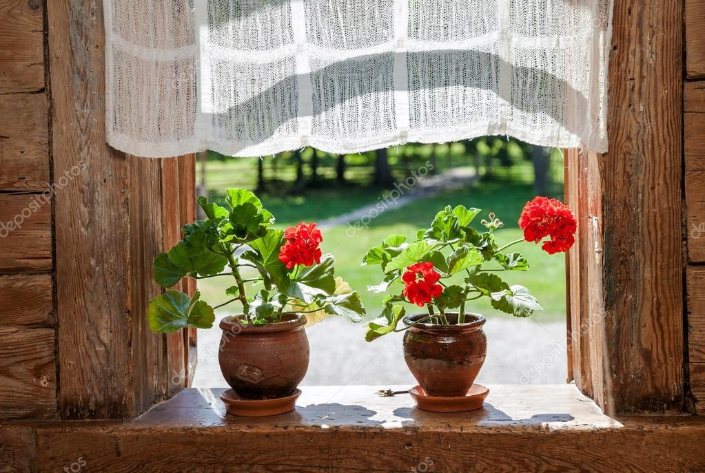 Фото с цветком на подоконнике