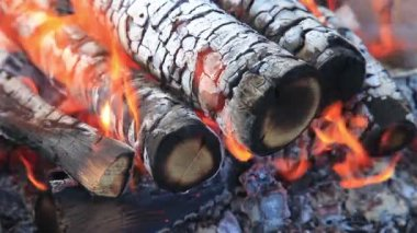 Closeup view of a bonfire flames and burning firewood — Stock Video